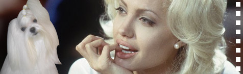 Angelina Jolie to play Marilyn Monroe in her terrier's biopic